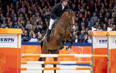 Euro-Cool stallions close the Stallion Competition with great results